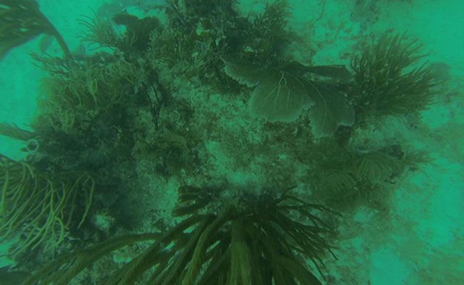 Underwater Survey of Unexploded Ordnance Off Culebra Island, Puerto Rico