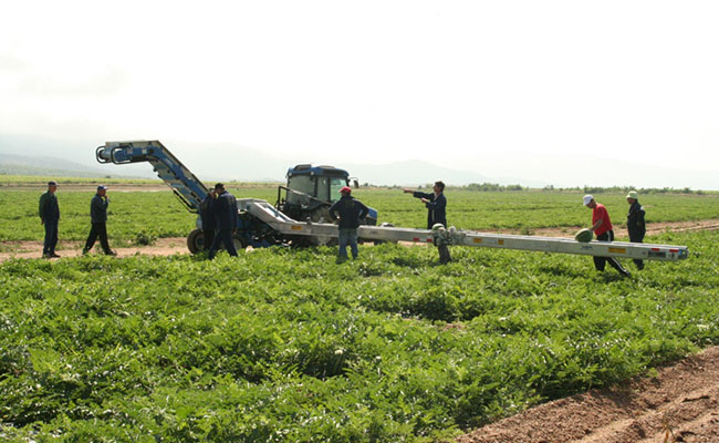 Farm workers employ new machinery to help increase production.