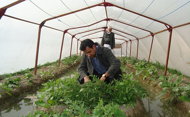 Local farmer from the Farah province tends to his nursery crops.