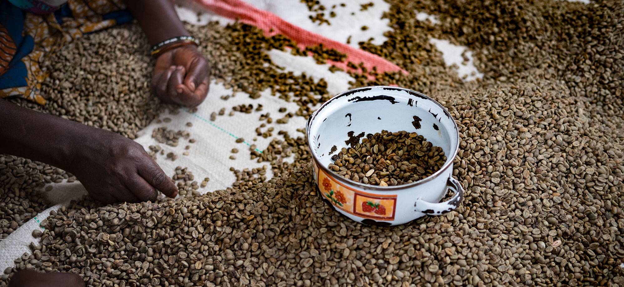 Bolstering livelihoods in Eastern Congo with increased production of specialty coffees