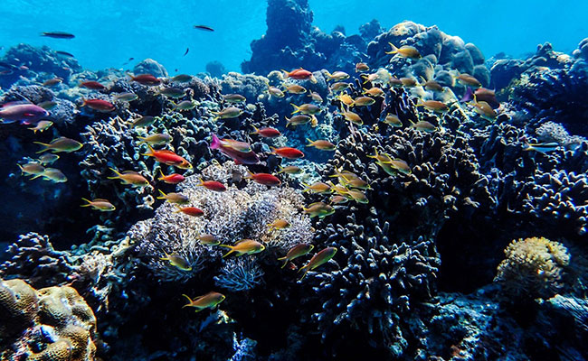 Improved fisheries management helps sustain life both above and below sea.