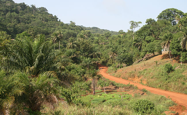 Tetra Tech is Domestic Rice Production in Liberia