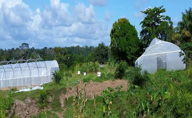A solar-powered greenhouse site where young Liberian women and men are trained to use and maintain the facilities.