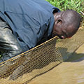 A man in northern Uganda sets up aquaculture netting.