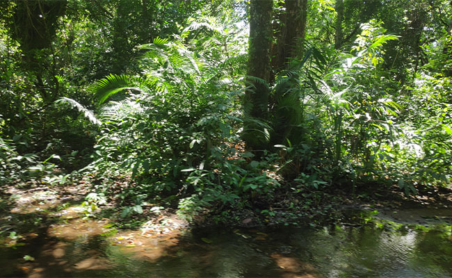 Myristica freshwater swamps conservation efforts to enhance the flow of water.