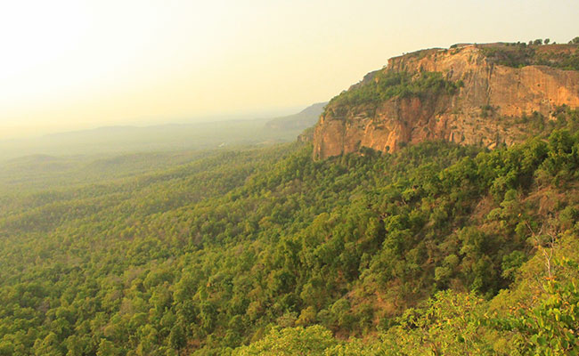 A view over Tamia forest in India.