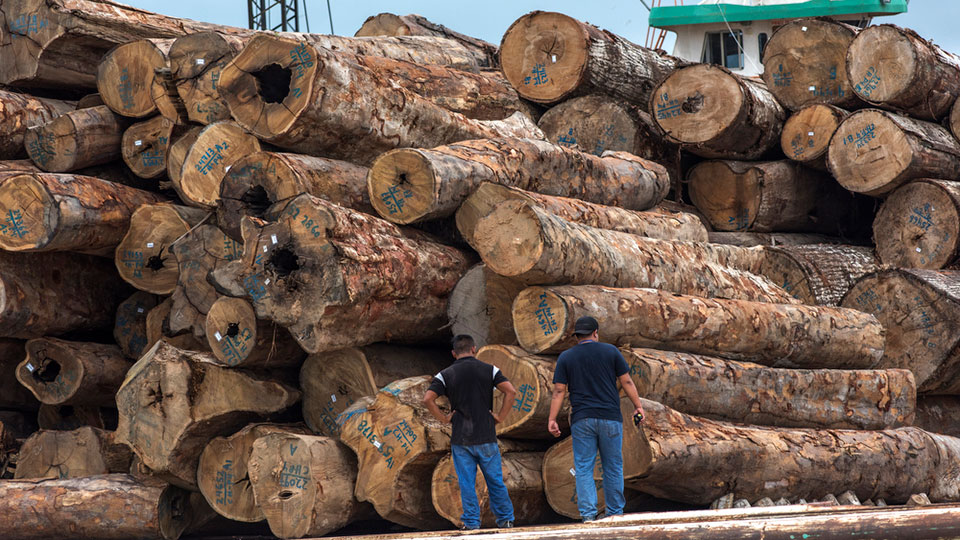 Logs at the Pucallpa port, located in the Amazonian region of Ucayali.