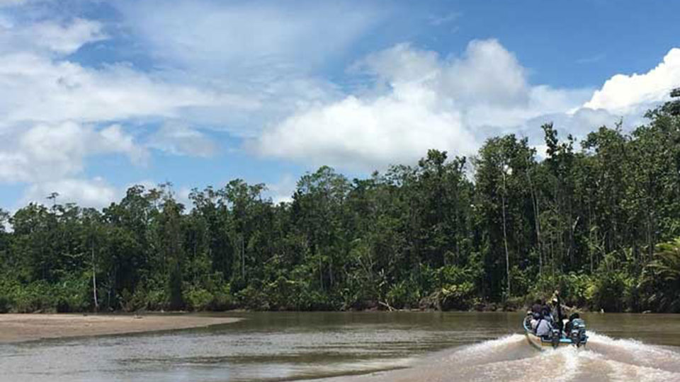 A community forest patrol group in Mimika District, Papua, conducts patrol activities in mangrove forests.