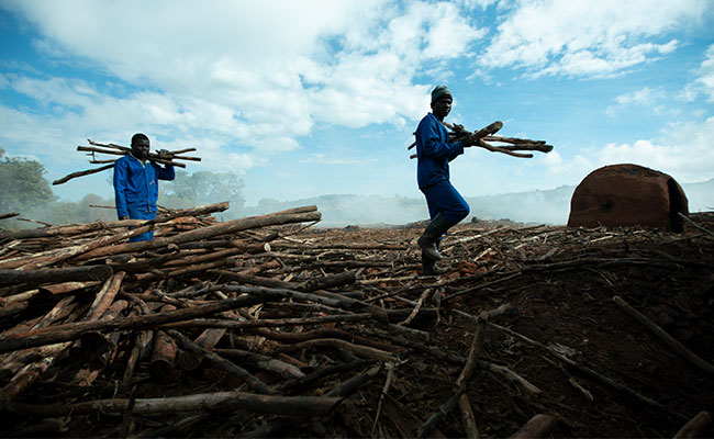 Loggers gather timber from a deforested area in Malawi.