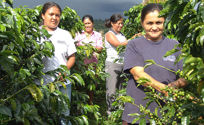 Women in the town of Eje Cafetero, Colombia, harvest coffee