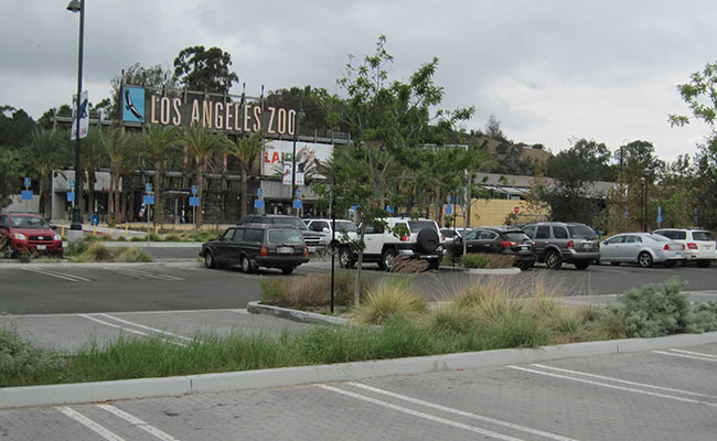 Tetra Tech designed and constructed rain gardens and permeable pavement to beautify the LA Zoo parking lot, which provid