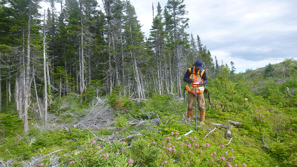 A Tetra Tech employee wearing PPE is standing near a forest and collecting data from a site investigation.