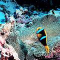 Coral Triangle CTI
