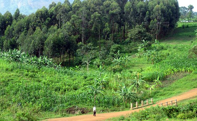 Uganda Mbale and Mukono
