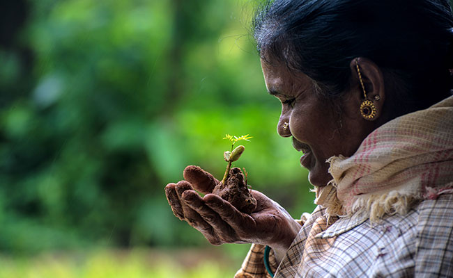 A woman holds a tree seedling in her hand in the forest in India.