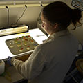 Tetra Tech's lab technician prepares test organisms to be used for toxicity identification evaluation testing.