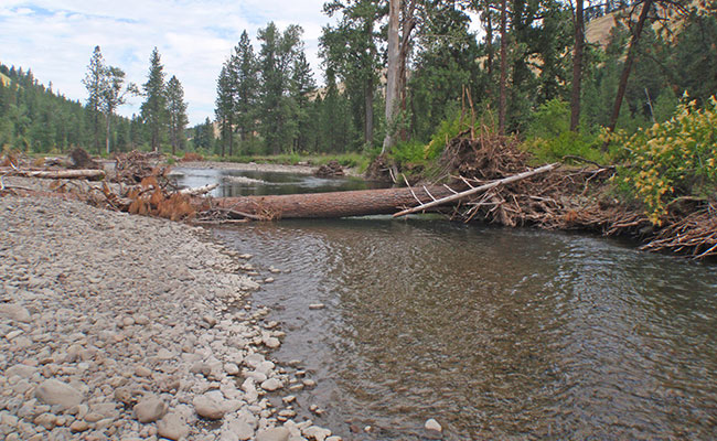 Tetra Tech's design resulted in increased log jams and improved fish habitat on Meacham Creek in Eastern Oregon.