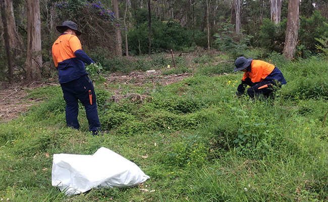 Trainees hand weed at Riverside Reserve.