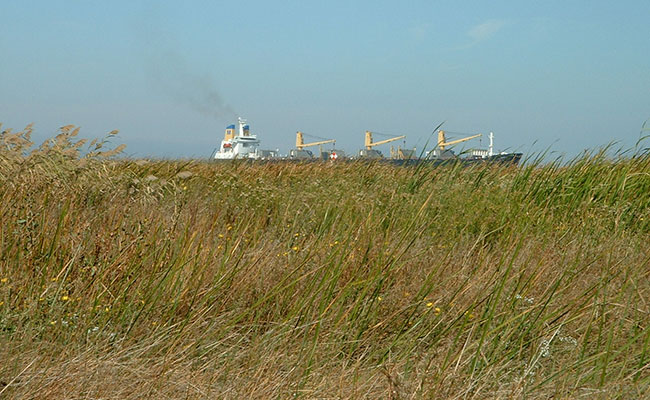 Vegetation Surveys, Military Ocean Terminal Concord California, 2014