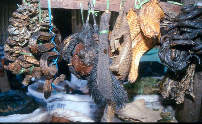 A Vietnamese wildlife marketplace with skins, hides, and furs of animals are handing. There are hotspots for spillover.