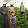 A local farmer, his son, and his workers gather around their plants in a local greenhouse in Iraq