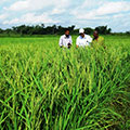Tetra Tech experts and MOA employees perform an assessment of local land used for farming