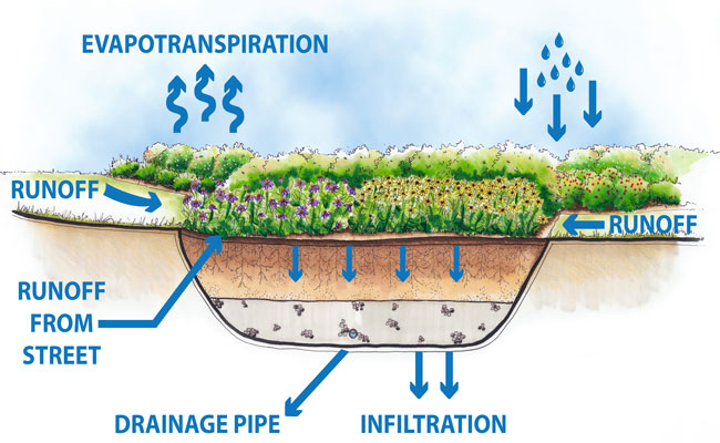 Bioretention features at Detroit's Viola Liuzzo Park will treat and infiltrate stormwater from streets and sidewalks.