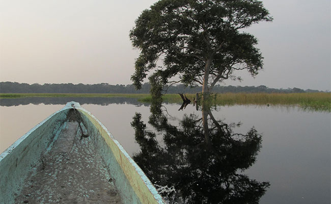 Tree reflection on a wooden boat on the Likoula Aux Herbes River near Lac Tele, Republic of Congo.