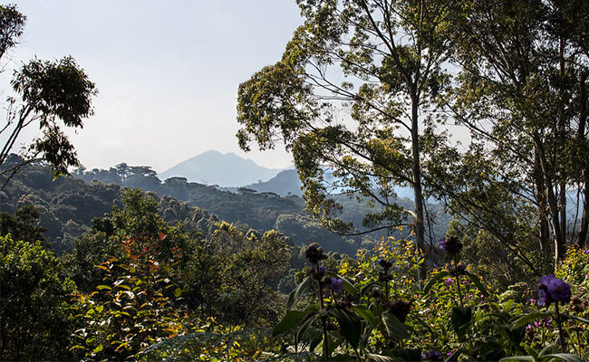 View of the biodiversity of the tropical rainforest in the Congo Basin.