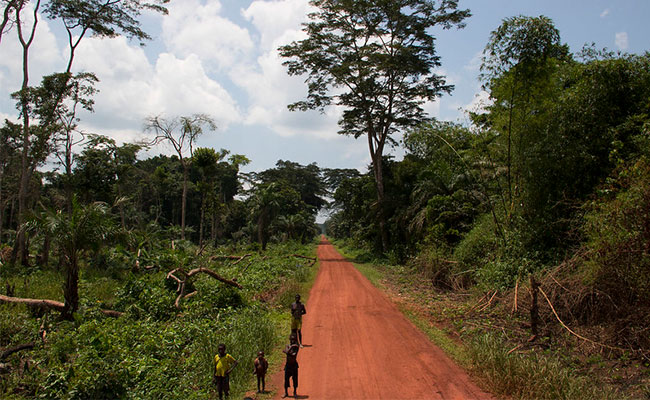A road through the forest in the Congo Basin.