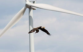 Eagle Wind Turbine