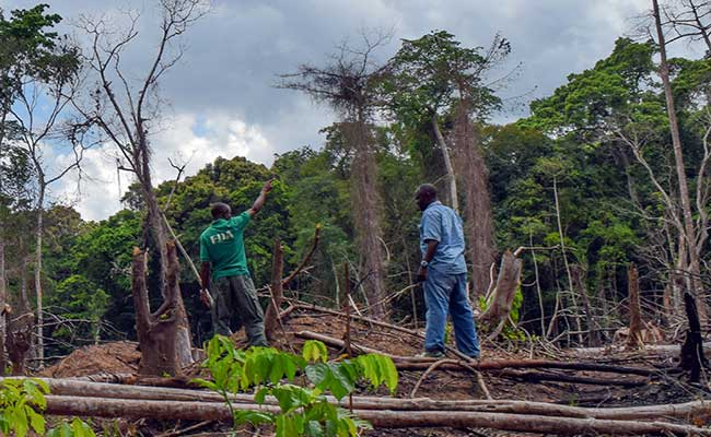 WA-BiCC and Forest Development Authority–Liberia staff assess slash and burn activities in a protected forest